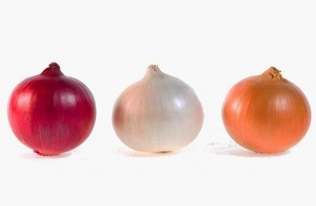 Onions grading machines